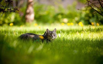 Котенок на травке  № 2954246 без смс