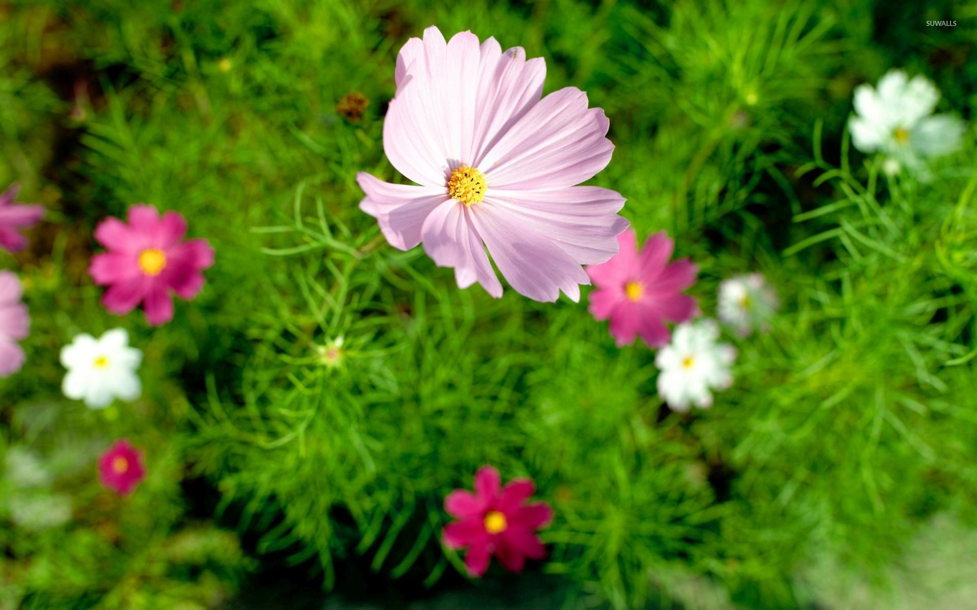 природа цветы ведро  № 464615 без смс