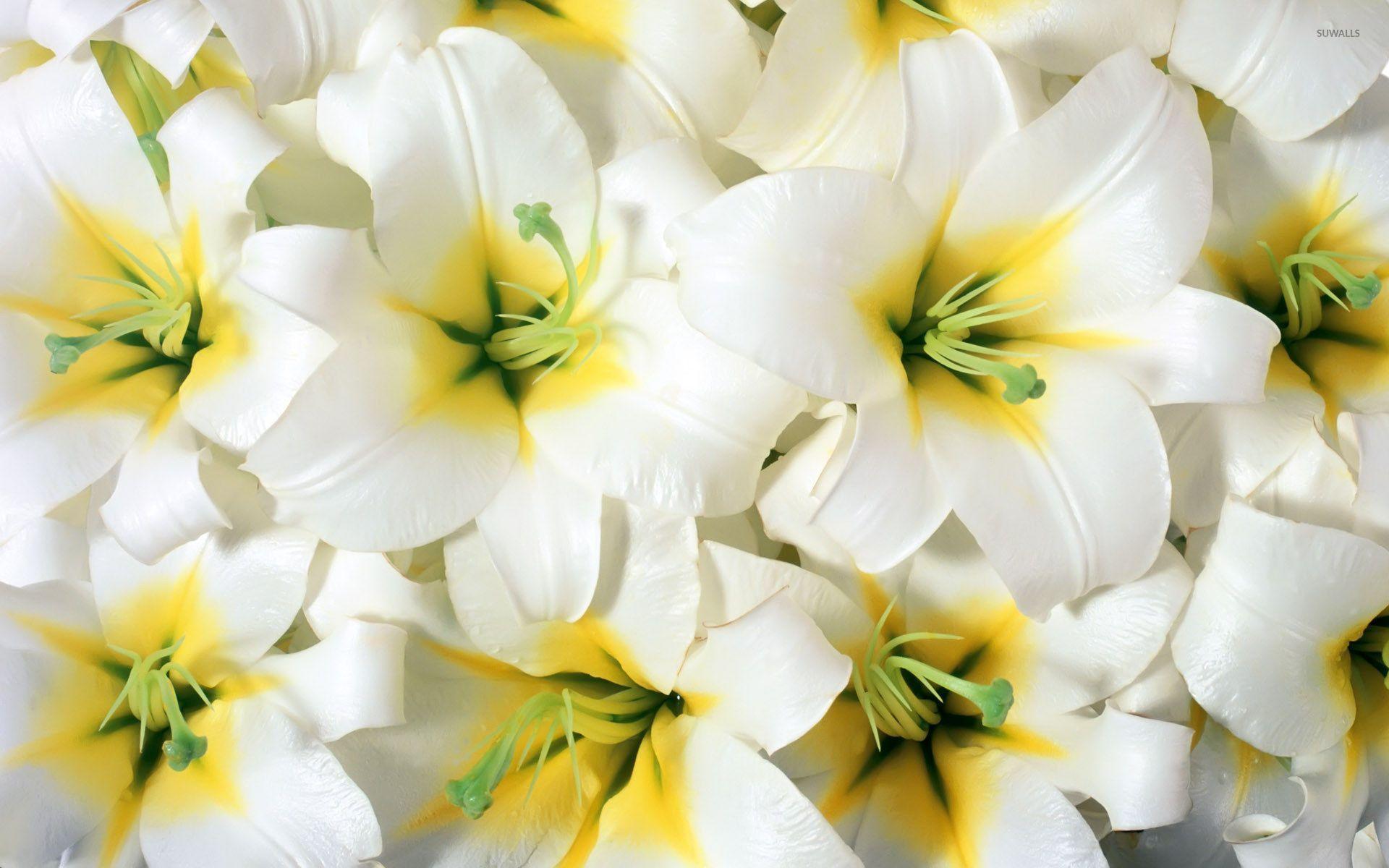 Цветы лилии и картинки с днем рождения