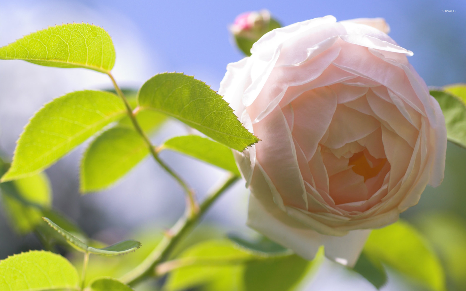Фото цветы большое