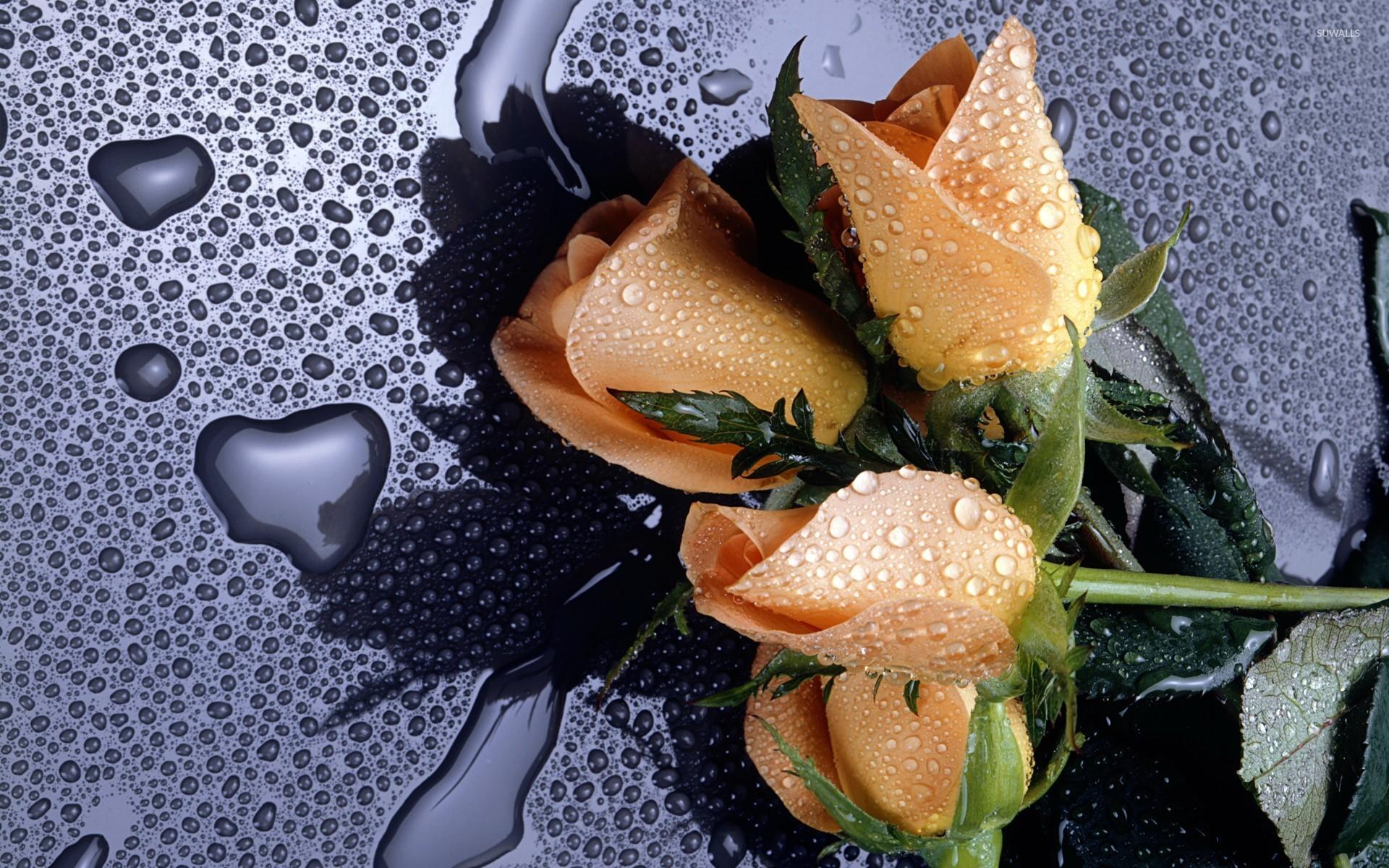 обои для рабочего стола розы красивые во весь экран № 233148 бесплатно