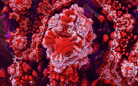 Amazing red fractal shapes wallpaper 1920x1080 jpg