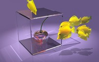 Fish around the glass cherry wallpaper 1920x1200 jpg