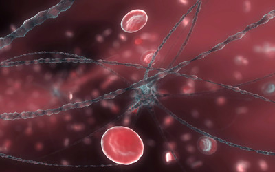 Neuron and red blood cells wallpaper