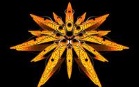 Orange flower wallpaper 1920x1080 jpg