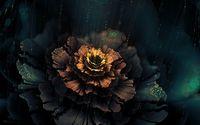 Beautiful flower [2] wallpaper 1920x1200 jpg