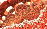 Fractal blood cells wallpaper 1920x1080 jpg