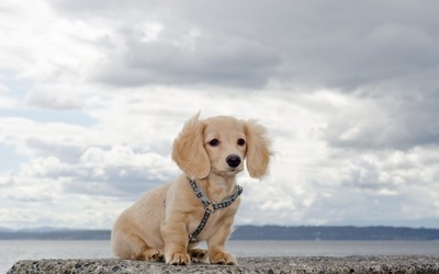 Adorable fluffy dog on a rock wallpaper