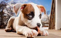 Adorable puppy wallpaper 1920x1200 jpg
