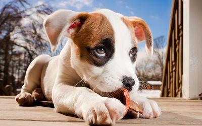 Adorable puppy wallpaper
