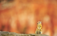 Attentive squirrel wallpaper 1920x1200 jpg