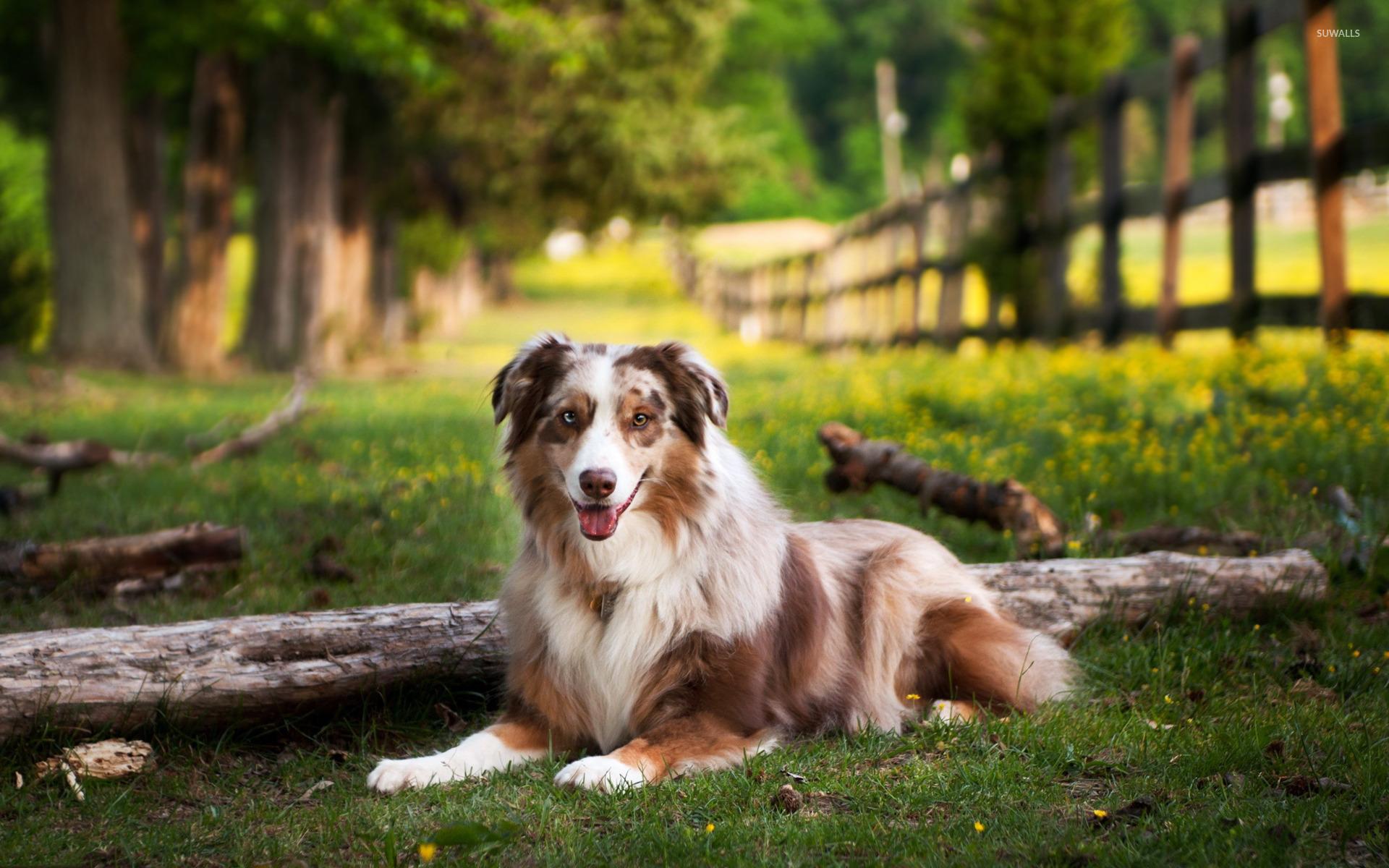 животные собака трава природа загрузить