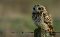 Barn owl [2] wallpaper 1920x1200 jpg