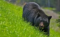 Bear [4] wallpaper 2560x1600 jpg