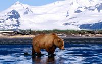 Bear wallpaper 1920x1200 jpg