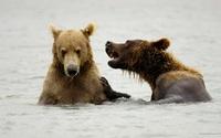 Bears wallpaper 1920x1200 jpg