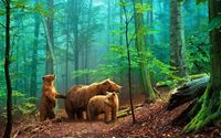 Bears in the foggy forest wallpaper 1920x1080 jpg