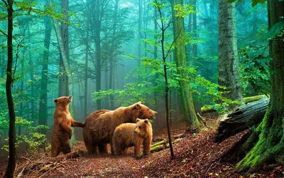 Bears in the foggy forest Wallpaper