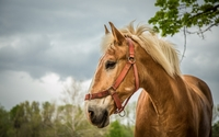 Beautiful horse from a side close-up wallpaper 2560x1600 jpg