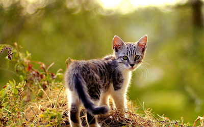 Beautiful small kitten wallpaper