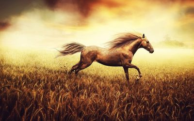 Beautiful stallion wallpaper