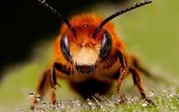 Bee [11] wallpaper 1920x1080 jpg