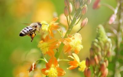 Bee [5] wallpaper