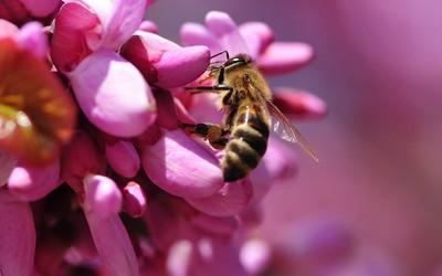 Bee [15] wallpaper