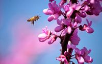 Bee [18] wallpaper 1920x1200 jpg