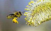 Bee wallpaper 1920x1200 jpg