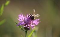Bee in the soft sunlight wallpaper 3840x2160 jpg