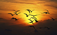 Bird flock silhouette wallpaper 2880x1800 jpg