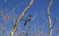 Bird in a tree wallpaper 3840x2160 jpg