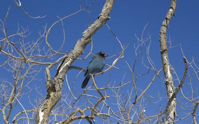 Bird in a tree wallpaper