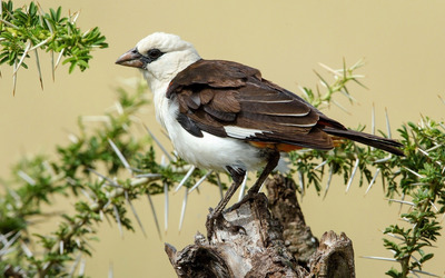 Bird on a tree trunk Wallpaper