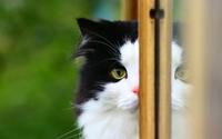 Black and white cat wallpaper 2560x1600 jpg