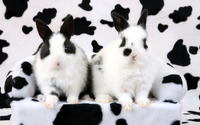 Black and white rabbits wallpaper 1920x1080 jpg