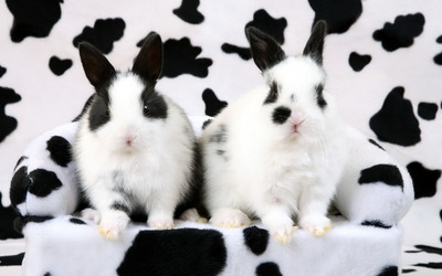 Black and white rabbits wallpaper