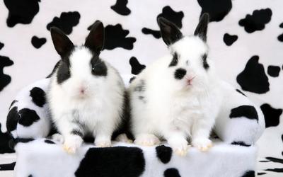 Black and white rabbits wallpaper