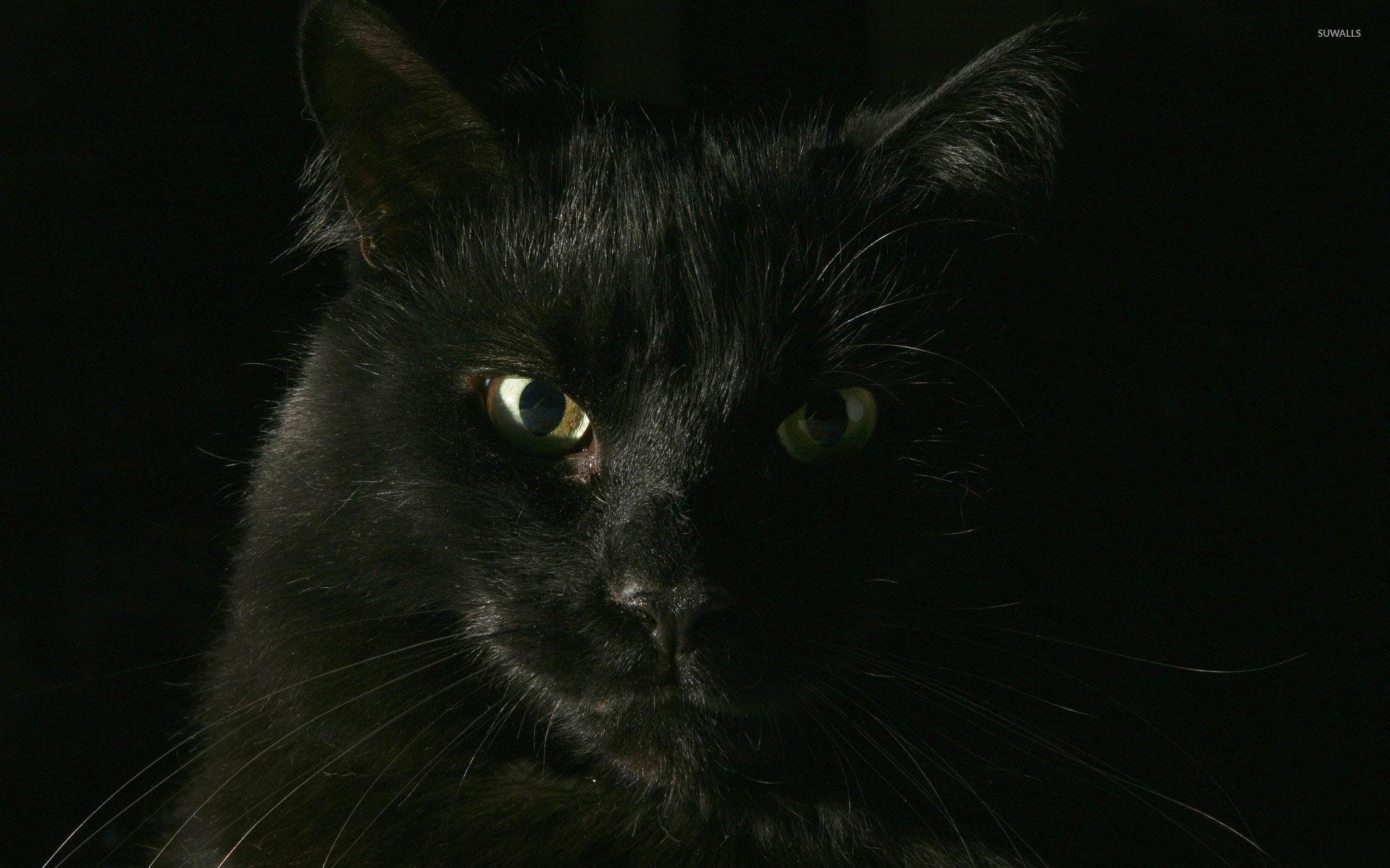 black cat wallpaper - animal wallpapers - #1731