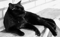 Black cat [3] wallpaper 2560x1600 jpg