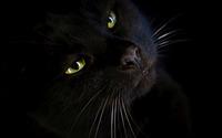Black cat [2] wallpaper 2880x1800 jpg