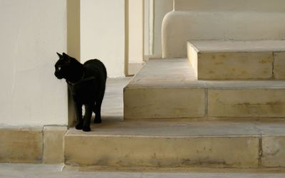 Black cat waiting on the stairs wallpaper