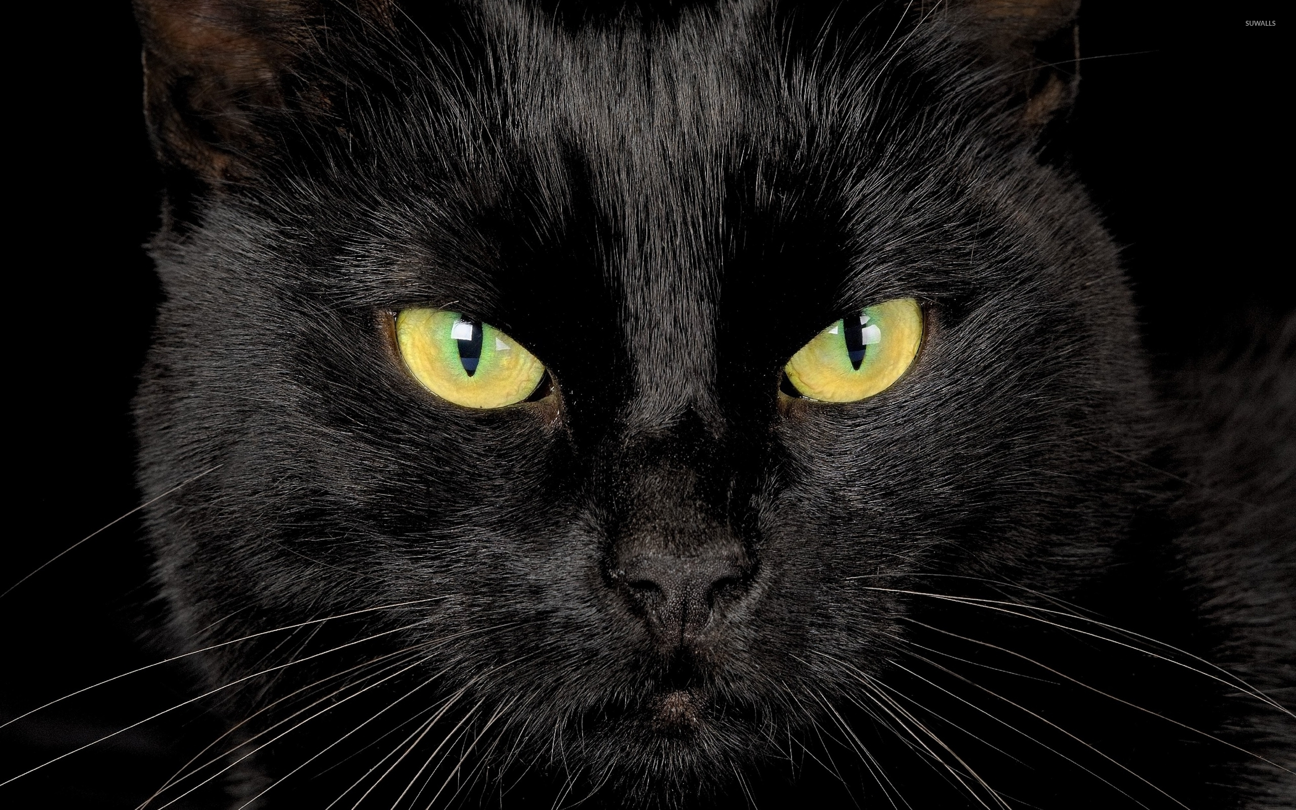Black cat with yellow eyes wallpaper - Animal wallpapers ...