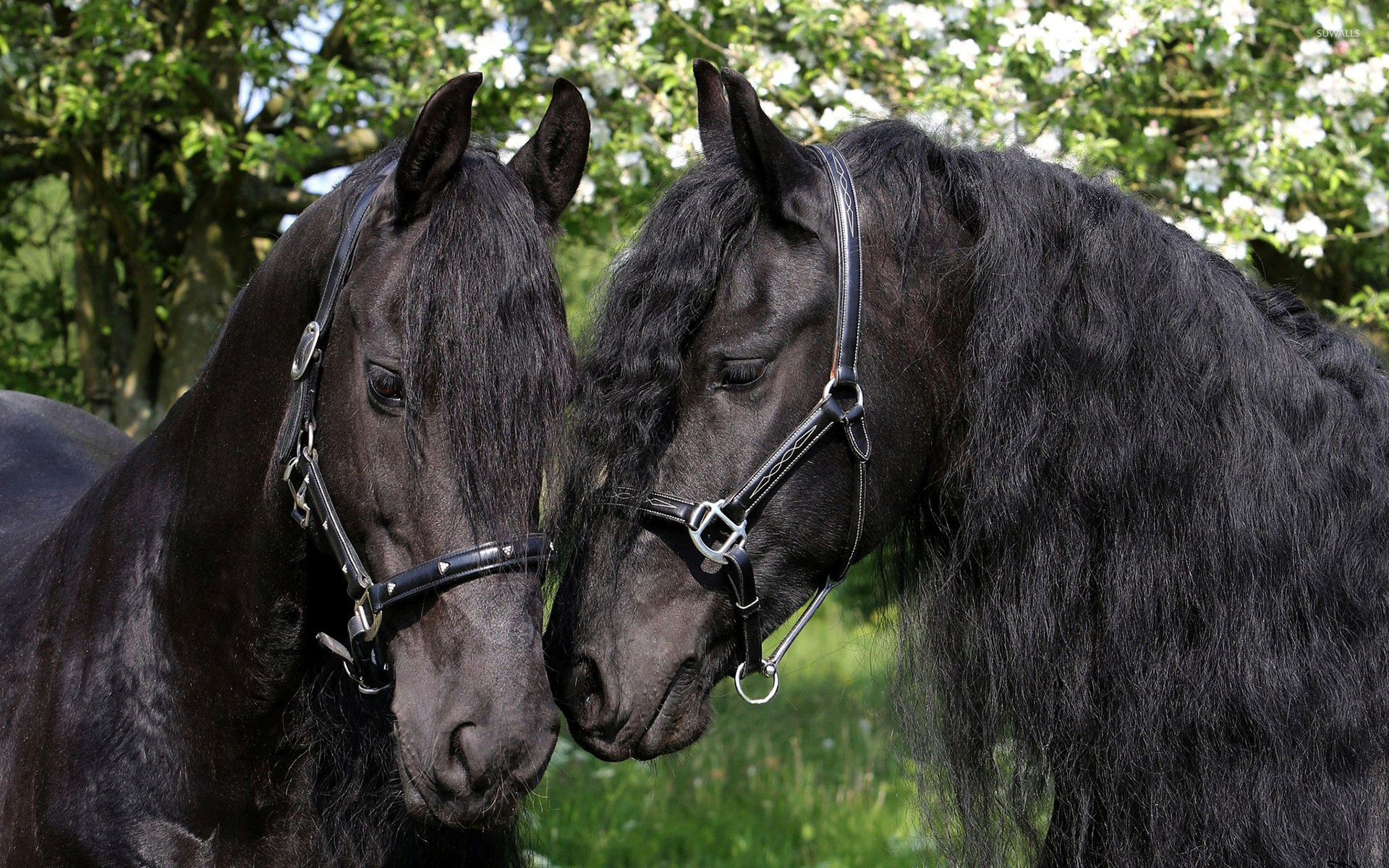 Black Horses Wallpaper Animal Wallpapers 32785