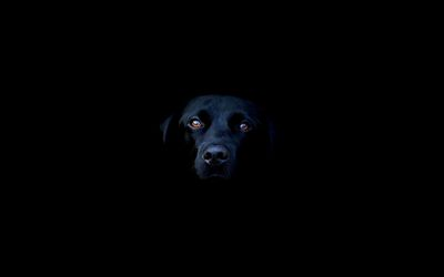 Black Labrador in the shadows wallpaper