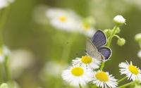 Blue butterfly [3] wallpaper 1920x1200 jpg