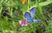 Blue butterfly [4] wallpaper 1920x1200 jpg