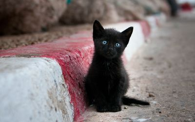 Blue eyed black kitten wallpaper