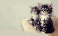 Blue eyed kittens wallpaper 1920x1200 jpg